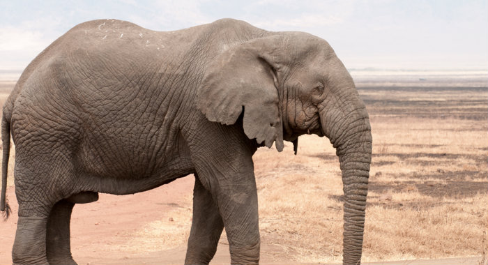 How would you get an elephant into a fridge? 10 weird job interview questions.