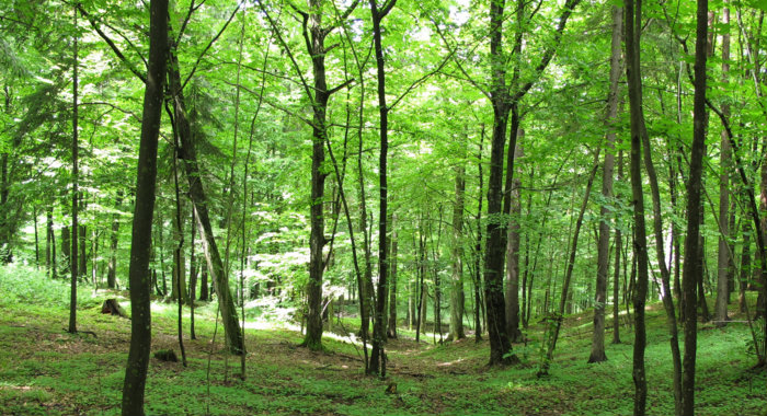 The SharePoint Groan – A Forest of Functionality